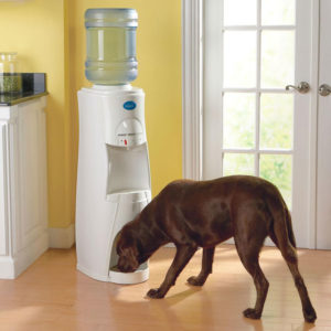 feed clean water for pets