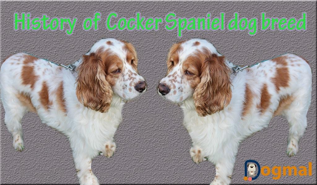 history of cocker spaniel dog breed