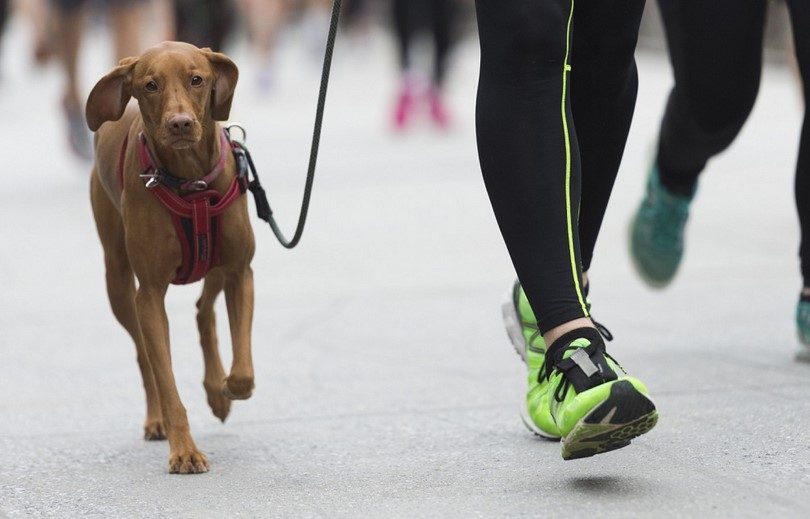 dogs promote exercise