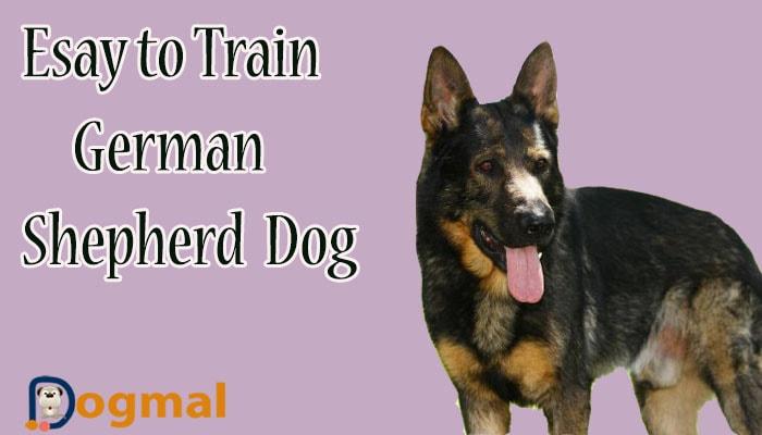 easy to train german shepherd dog