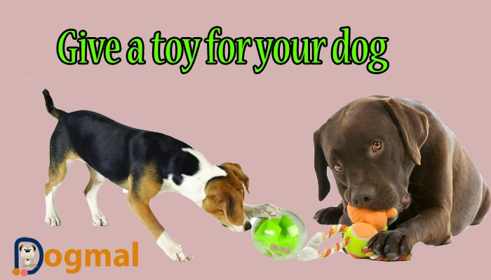 give a toy for your dog