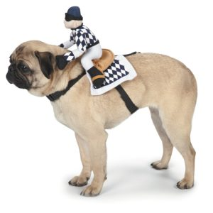 Horse racer costume for dog