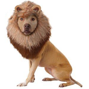 Animal Planet Pet Lion Costume