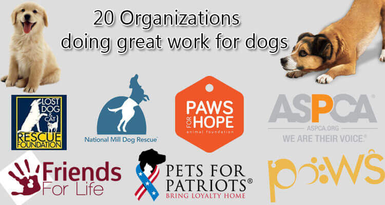 Animal Welfare Organization Insurance Program will partner with you to help you understand your insurance protection policies, how they protect your organization, and why they are important to your nonprofit animal welfare organization.
