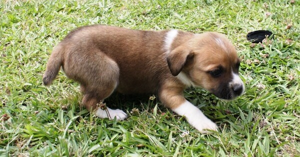 cur mountain puppy picture