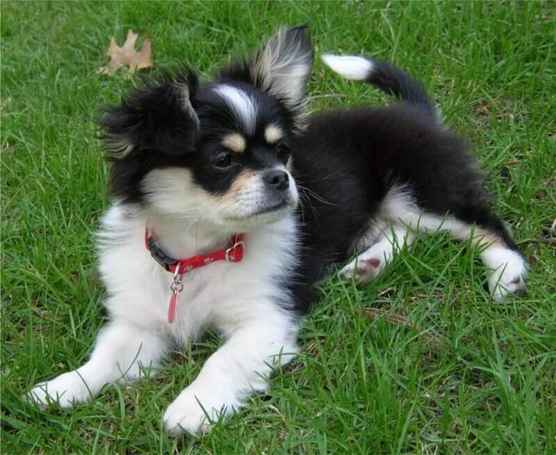 cheeks dog photo