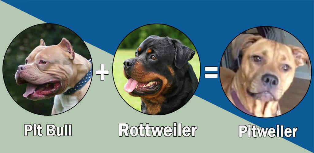 Pitweiler