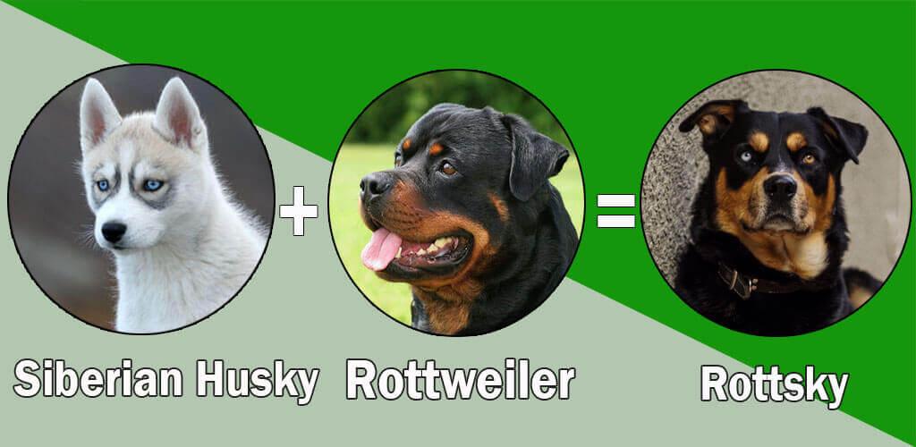 Rottsky