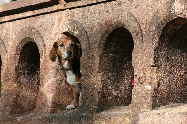 dachshund puppies photo