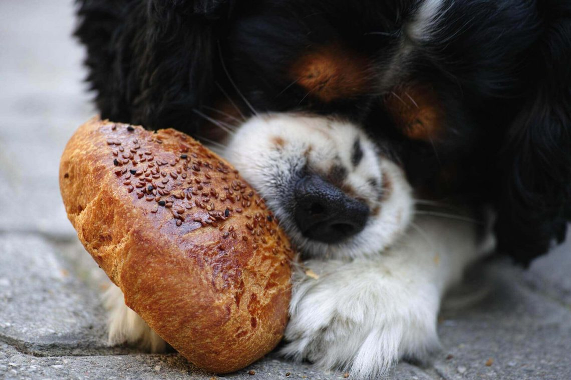 Balanced Diet so important for dogs