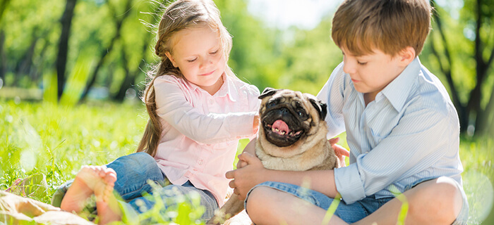 pug_ideal_with_children