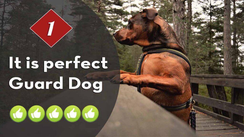 1-guard-dog