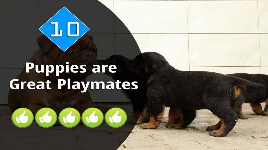 10-Puppies are Great Playmates
