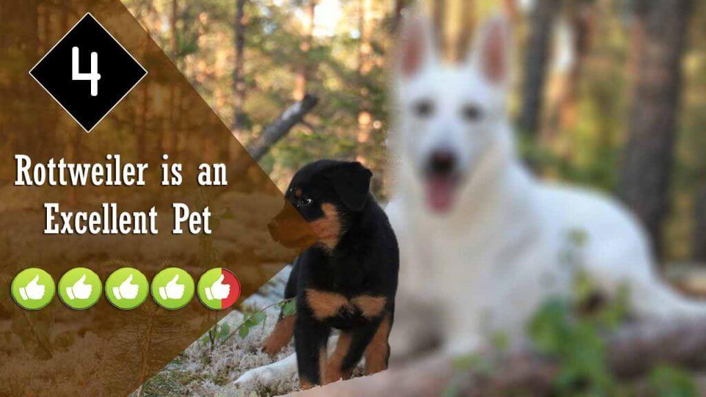 4-excellent-pet