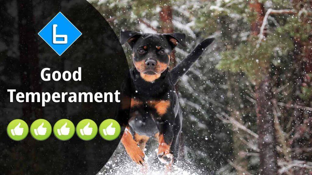 6-Good Temperament
