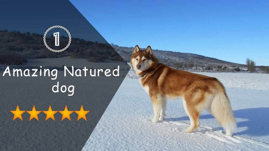Amazing Natured dog
