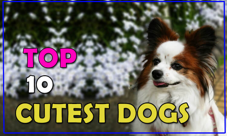 The 10 Cutest Dog Breeds In The World 2018 By Dogmal